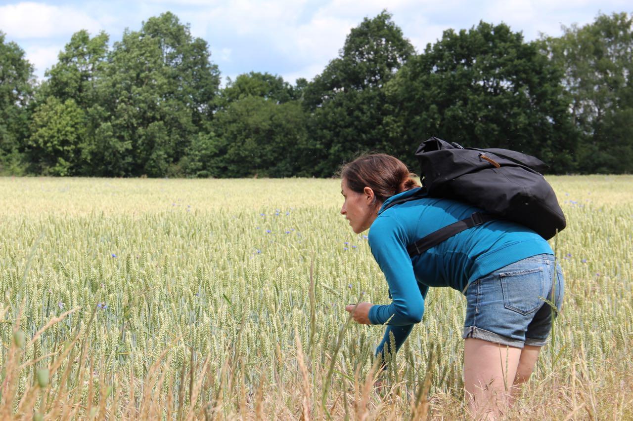 Mitten in einem Kornfeld in Brandenburg, in der Nähe vom Senftenberger See